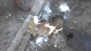 Кот-клещ