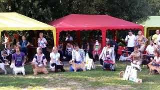 18/08/13 Бэст щенков Всероссийская выставка собак всех пород