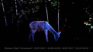 """Волшебный лес в Парке """"Останкино"""". 24.07.2017"""