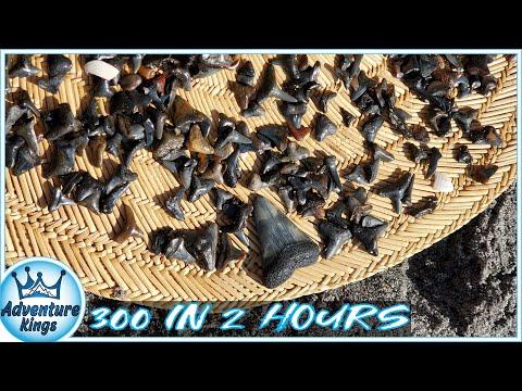 Venice Beach Florida | 300 SHARK TEETH In 2 HOURS!!!