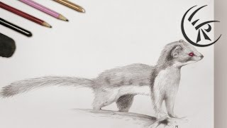 "Drawing ""Weasel"" ►► Timelapse"