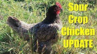 Sour Crop Chicken Update