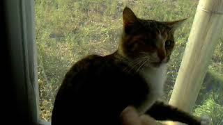 Влепите в своё видио (кошка застряла между окн)