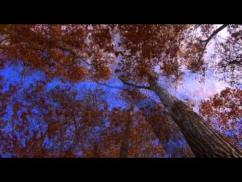 Autumn Ambient Mix - 2011