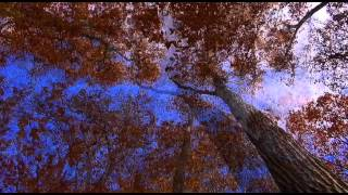 Autumn Ambient Mix - De Benedictis, 2011