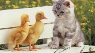 Смешные Кошки Бытие Толчки Компиляция 2016   Animalz TV НОВОЕ Смешные Кошки видео