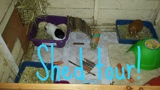 Rabbit And Guinea Pig Shed Tour | March 2014