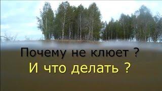 видео Почему не клюет карась - секреты ловли и как заставить карася клевать