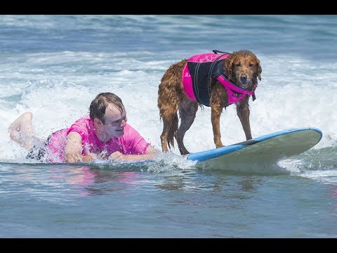 Surfing Dog & Quadriplegic Boy Make History With First-Ever Canine Assisted Tandem Ride