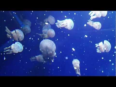 Subic Ocean Adventure - Sea Creatures