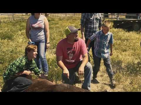 (Re-edit) Knight Land & Livestock - Branding the best livestock in the US