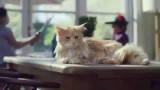 amazing-funny-videos