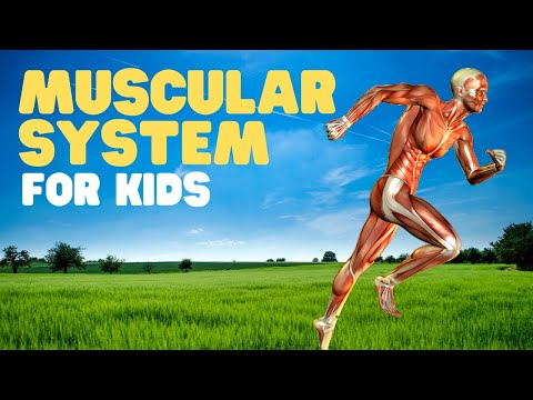Muscles for Kids   A fun intro to the muscular system for kids