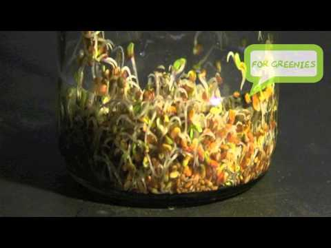 Make an Easy Jar Sprouter & Start Sprouting Sprouts! HD