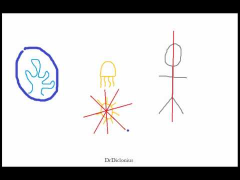 Biology Animal Symmetry