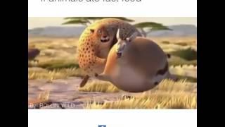 Video Kartun Lucu, kreatif (Animal Fat) download MP3, 3GP, MP4, WEBM, AVI, FLV Juli 2018