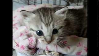 Отдаю котят в добрые руки