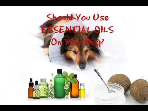 3 Essential Oils for Dogs