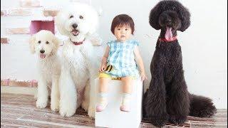 萌翻!1歲小女孩和3條狗狗,同睡同吃,還穿同款……