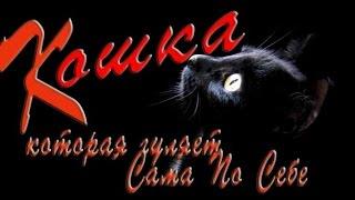 """Песня под гитару """"Книга джунглей или Кошка, которая гуляет СПС"""" Песня о женщине или всё же о кошке?"""
