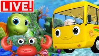 Wheels On The Bus Underwater +More Kids Songs | Little Baby Bum | LIVE STREAM
