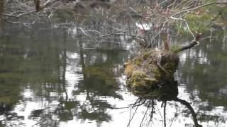 五色沼湖沼群 母沼2015