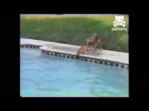 Dog saves puppy from swimming pool - Yahoo! News UK.flv