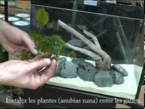 décoration aquarium astuce