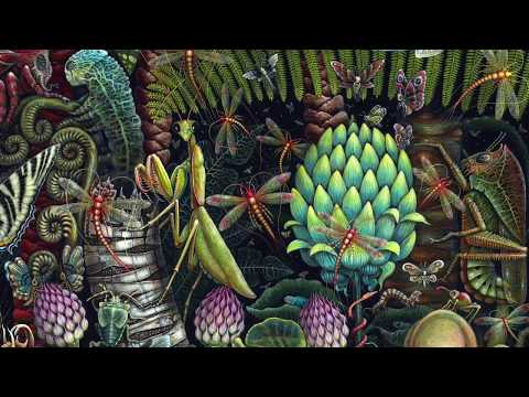 Terence McKenna - The Nature Of Nature