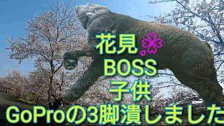 おはようございます☀   今日の動画は息子と娘とお花見   超大型犬ボス君...