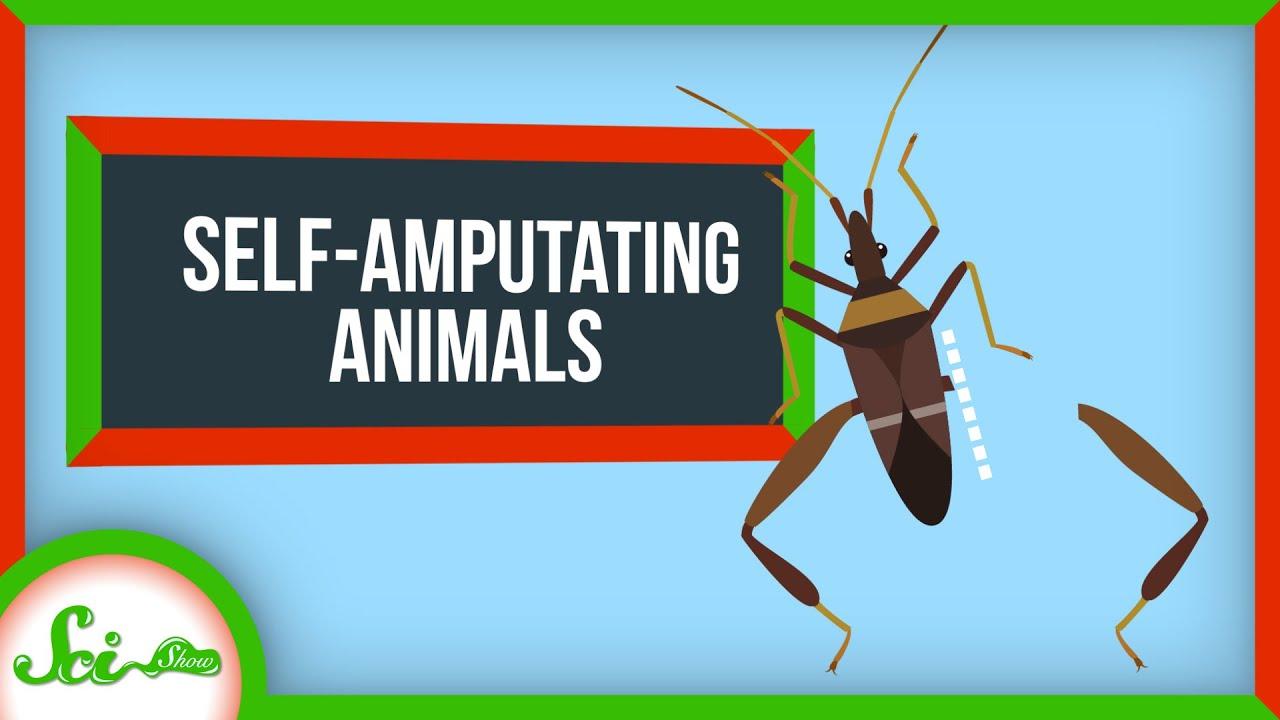 Why Animals Keep Self-Amputating
