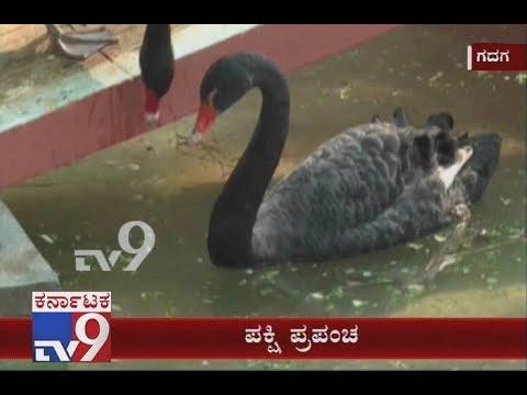 Binkadakatti Zoo in Gadag Taluk Upgraded from Mini to Small, Exotic Birds Woo Visitors to Zoo