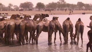 Afrique, LA SÉCURITÉ ALIMENTAIRE EN ZONE CEMAC