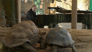 Musician Richard Clayderman plays piano for tortoises at London Zoo