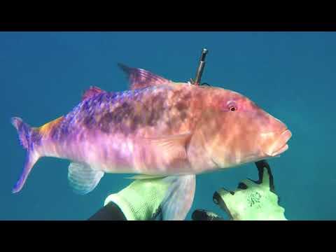 Spearfishing Hawaii 2017