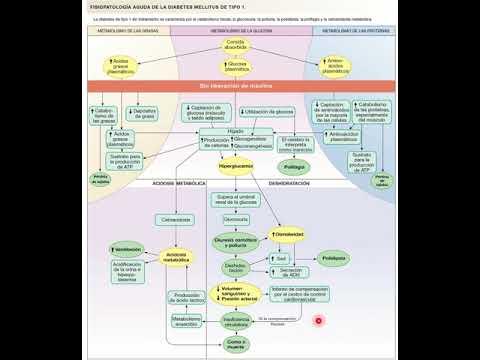 fisiopatología-de-la-diabetes-mellitus-tipo-i