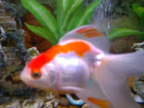 Was xxx fish xxx