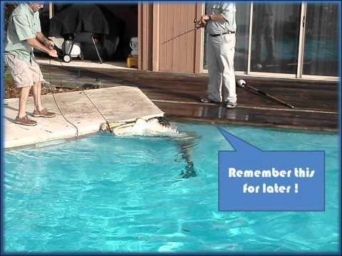 Alligator in Pool Ponte Vedra Beach FL.wmv