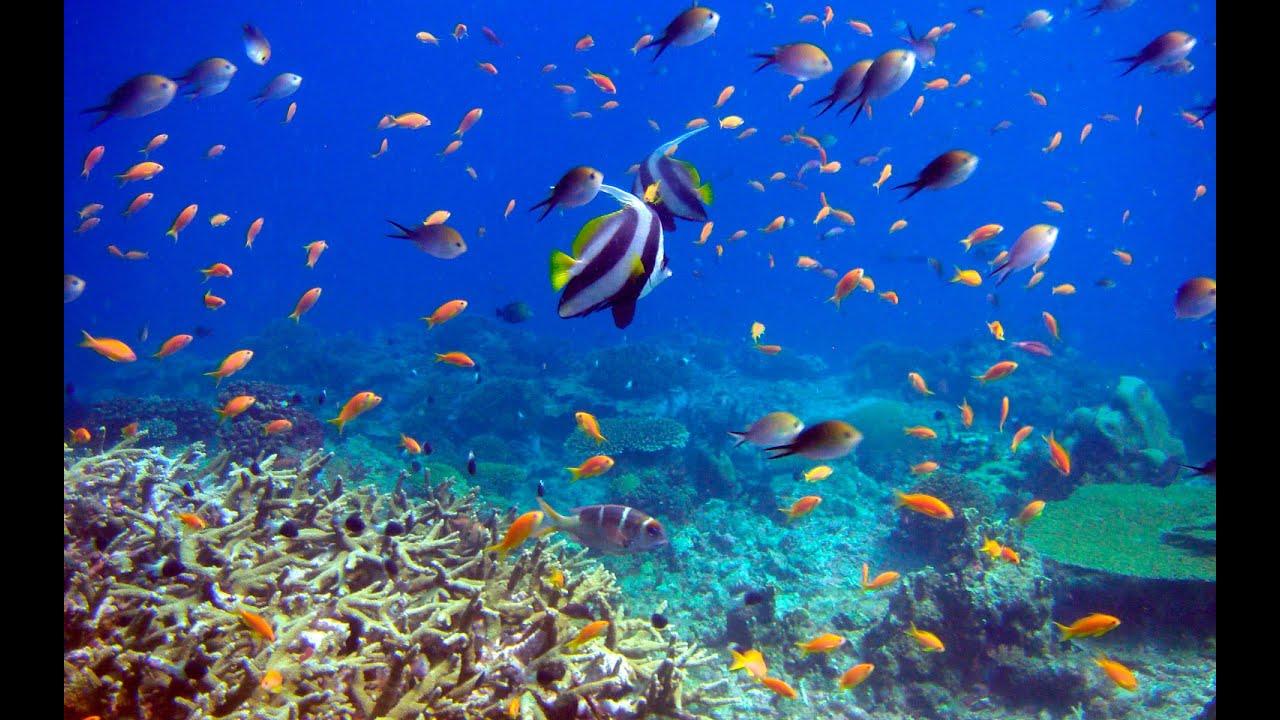Beautiful Underwater Extreme !!!!!