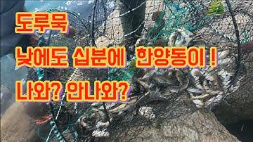 [[실시간소식]] 도루묵은 고수 하수가 없습니다.  ^^   튼튼한체력만 있다면 누구나 ~ !      자~ 출발 !
