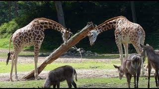 Burgers Zoo - impressie middagbezoek / Arnhem 2017