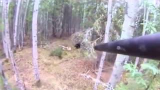 Видео охота на медведя Bear hunting   YouTube(ВСЁ САМОЕ ЛУЧШЕЕ ПРО ОХОТУ НА НАШЕМ КАНАЛЕ., 2015-08-12T14:25:45.000Z)