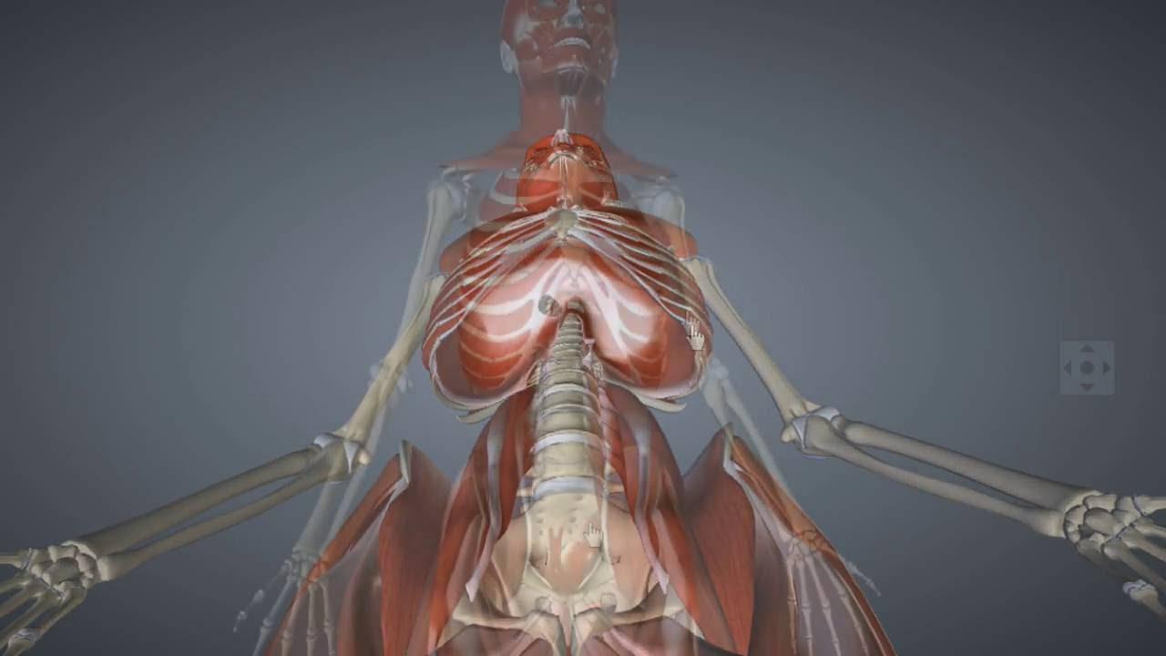 Anatomía del Abdomen en Radiología - YouTube