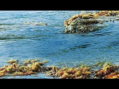 e3f2edfa3c0 Water Desalination  Meeting the Climate Change - YouTube