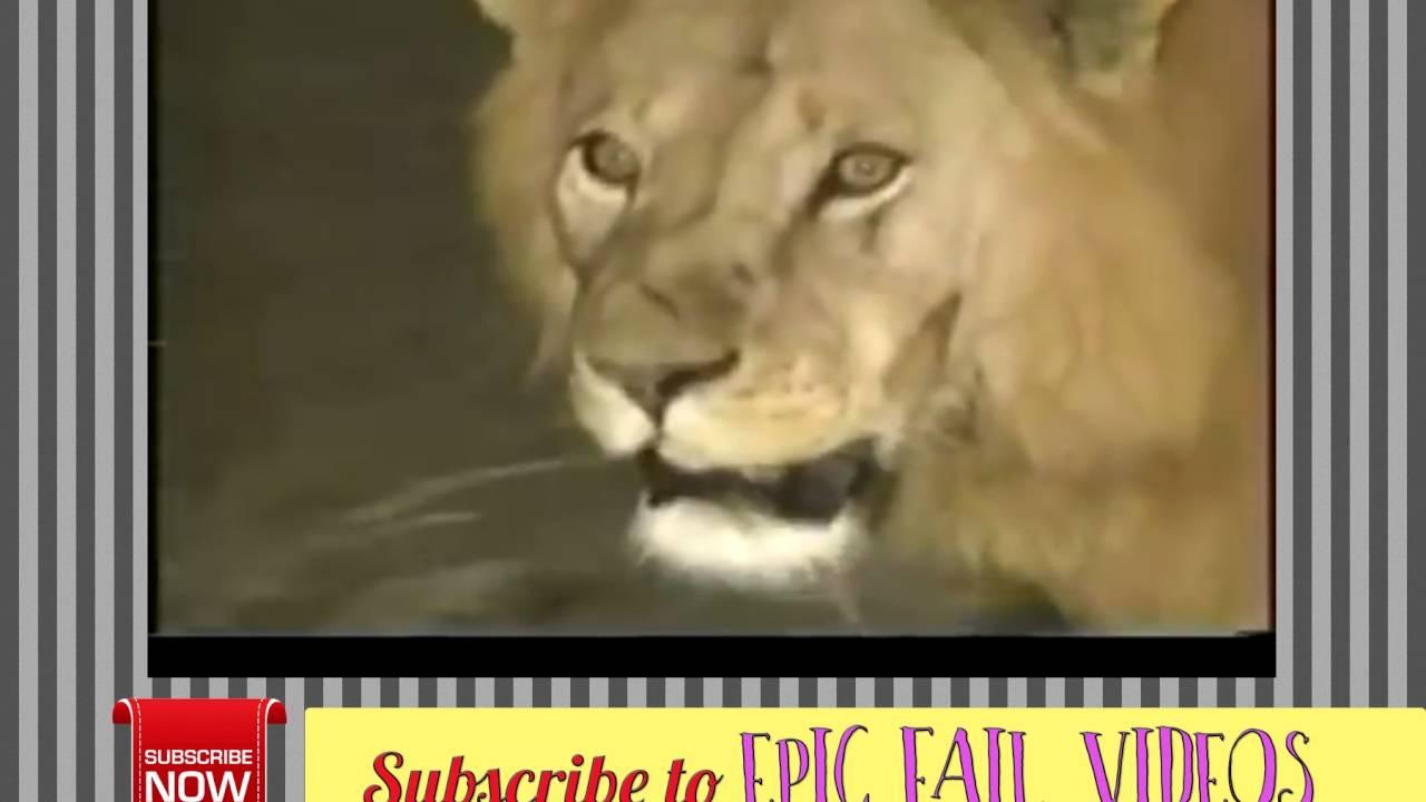 Male Lion vs ENTIRE Hyena Clan. - YouTube