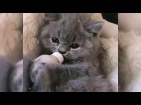 Kumpulan Kucing Lucu Imut Pintar Dan Menggemaskan Youtube