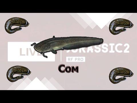 Русская Рыбалка 3.8 Ловля сомов