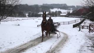 Horse Drawn Sleigh in the Snow at Beamish