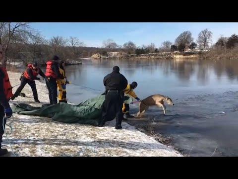 شاهد: إنقاذ غزال علق في بحيرة متجمدة في ولاية كنساس الأمريكية…  - نشر قبل 55 دقيقة