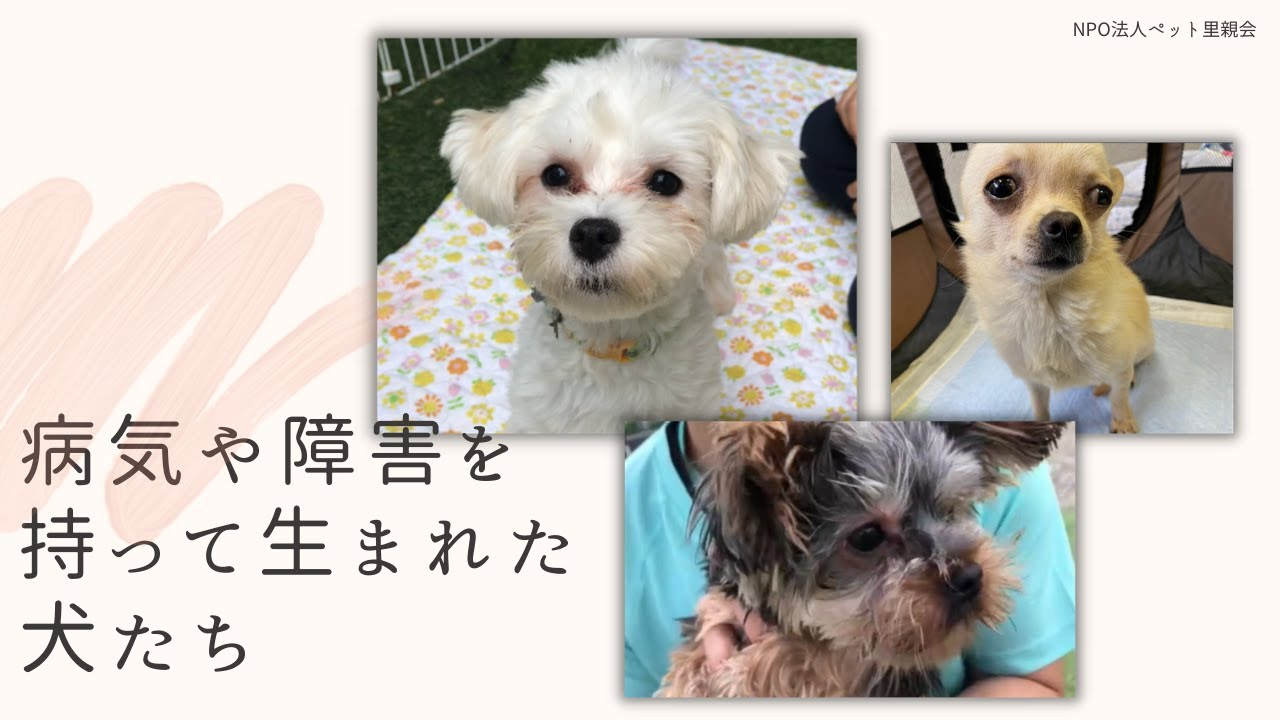 病気や障害を持って生まれた犬たち